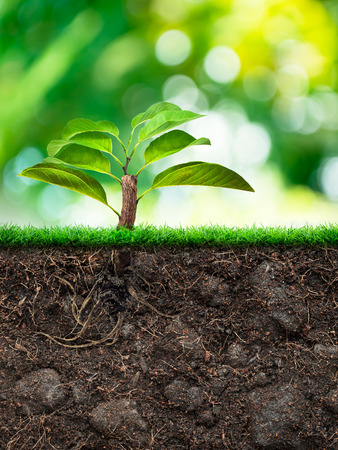 Origin tree and Soil with Grass in green blur background