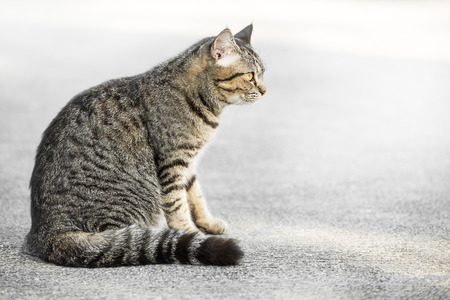 lonesome: Single grey cat in the act of feel lonesome