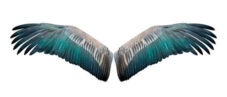 흰색 배경에 고립 된 새 날개의 확산