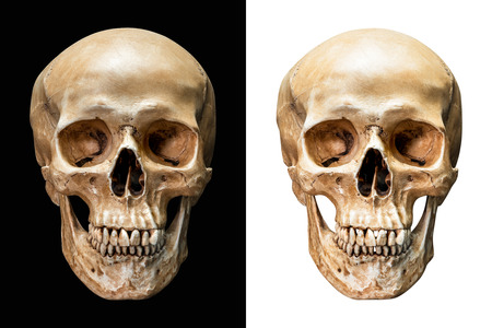Front of human skull isolated on black and white background with clipping path