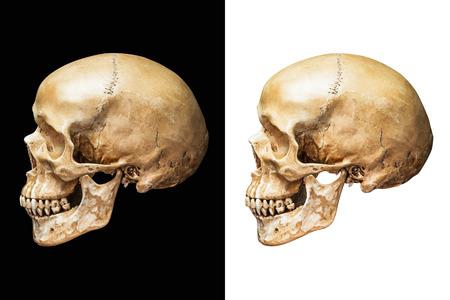 tete de mort: Côté du crâne humain isolé sur fond noir et blanc avec chemin de détourage Banque d'images