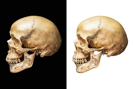 Side of human skull isolated on black and white background with clipping path Imagens