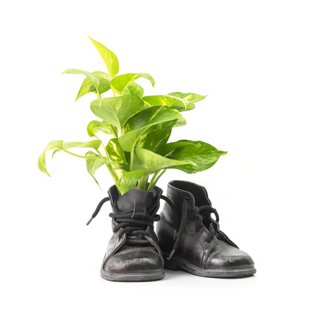 Green houseplant in combat boots for decoration isolated on white background with clipping path Stockfoto