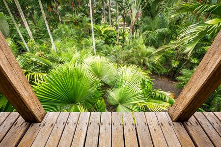 botanika: Dřevěné Skywalk v palmové zahradě pro botaniky cestování