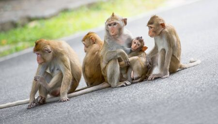 nipple man: Monkey family at natural park