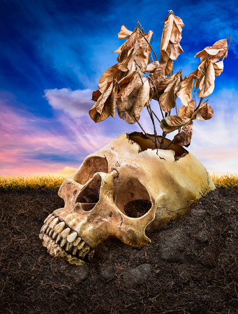 inter: Broken human skull and dead tree bury underground on fantasy sky background in concept of effect from natural damage Stock Photo