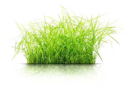 clump: Clump of grass isolated on white background