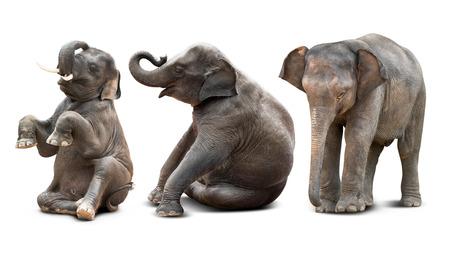 Schattige baby Aziatische olifant in verschillende actie op een witte achtergrond