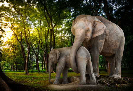 alive: Elephant family be alive in the forest Stock Photo