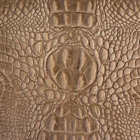 epidermis: Brown crocodile leather pattern for background and texture