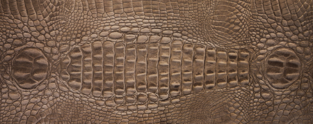 knobby: Brown crocodile leather pattern for background and texture