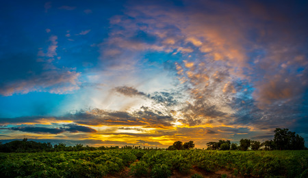 Beautiful Sunset At The Cassava Field In Agriculture Garden Land Photo
