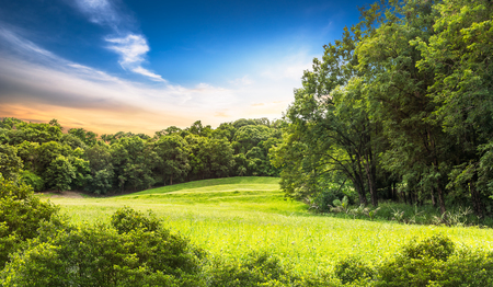 gloaming: Tree and turf in golf course on sunset time Stock Photo