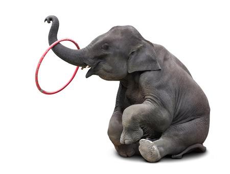 白い背景に分離したかわいい赤ちゃん象を演奏フープ