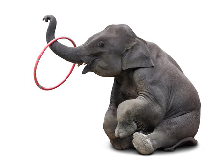 Cute baby elephant playing hoop isolated on white background Stockfoto