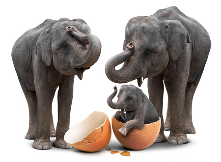 Elefante lindo bebé eclosión de cáscara de huevo y familia en concepto de nueva vida aislada sobre fondo blanco con trazado de recorte Foto de archivo