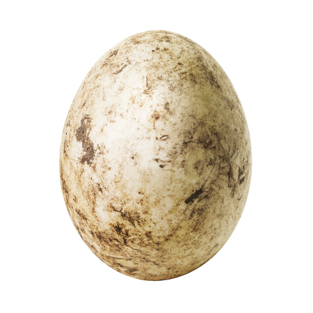 ostrich chick: White dirty egg isolated on white background Stock Photo