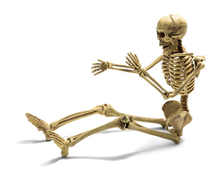 Sitting human skeleton model for basic medical education isolated on white background with clipping path