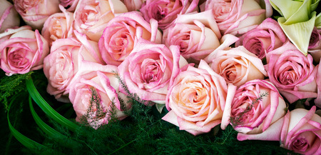 Bouquet of beautiful pink rose with green leaf for decoration or anniversary