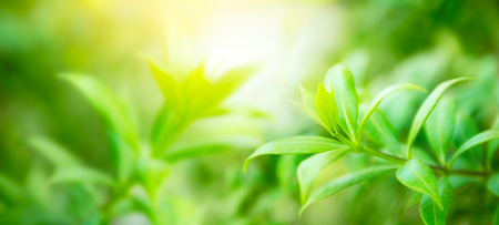 Soft and blur natural green leaf on blurred greenery background with copy space