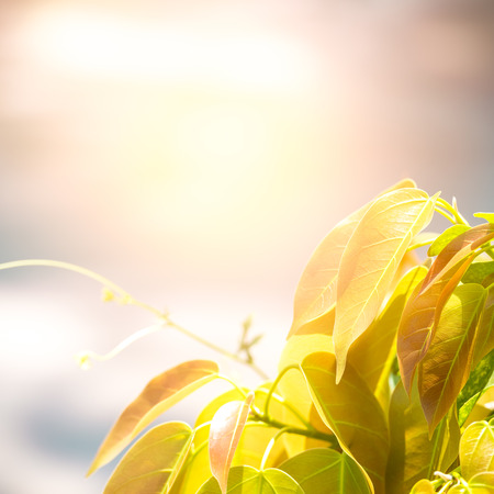 Soft and blur natural sprout of tree and yellow leaf on blurred bokeh background with copy space