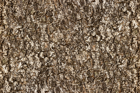 Bark of tree for background and texture material