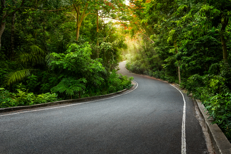 Single lane asphalt road pass through the forest Stok Fotoğraf
