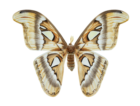Beautiful brown butterfly isolated on white background with clipping path 写真素材