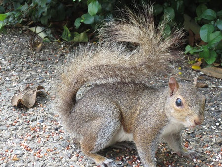 passerby: A squirrel stares at the passerby
