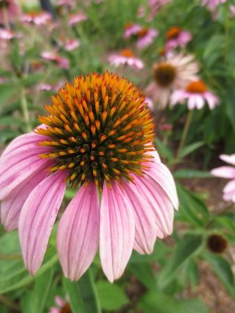 Single flower in a field