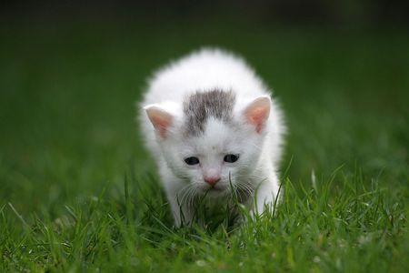 Small kitten exploring the big world Stock Photo - 380929