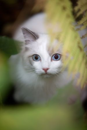 loveable: Pretty young kitten looking very attentive in the garden