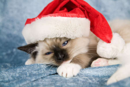 Cute little kitten looking quite unhappy with wearing a santa hat photo