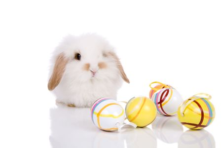 Cute little lop-eared dwarf bunny with easter eggs Stock Photo - 2585314