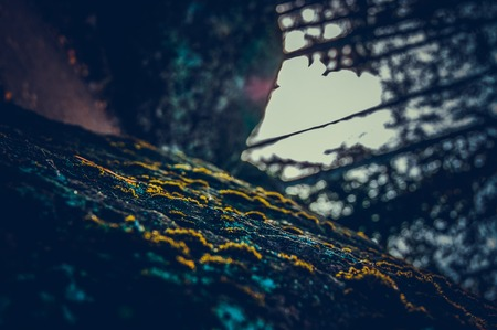 Moss on the stone. Abstract background. Inverted horizon in a cool vintage style.