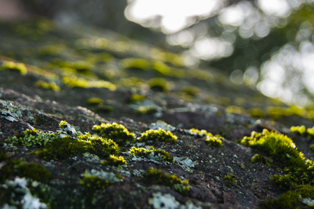 Moss on the stone. Abstract background. Inverted horizon. Live color without processing