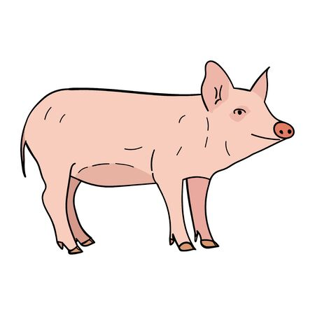 Pig in doodle style.  illustration on white background.