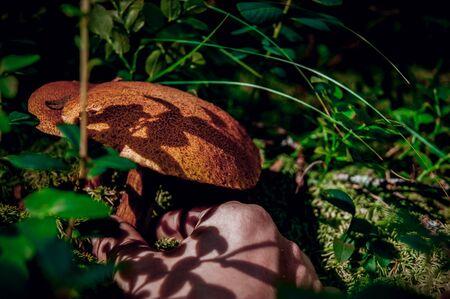 Hand reaching for a mushroom. Forest walk.