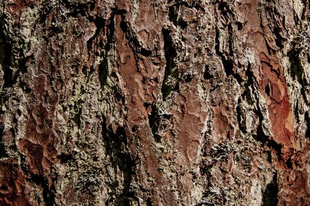 The texture of the bark of a tree. A tree in the forest. Foto de archivo