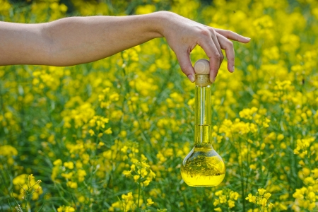 biodiesel plant: A bottle of rapeseed oil with rape flowers