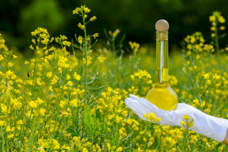 A bottle of naturel rapeseed oil in a rapefield