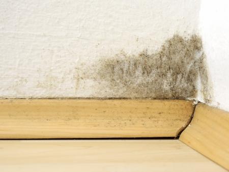 esporas: Moho en el apartamento