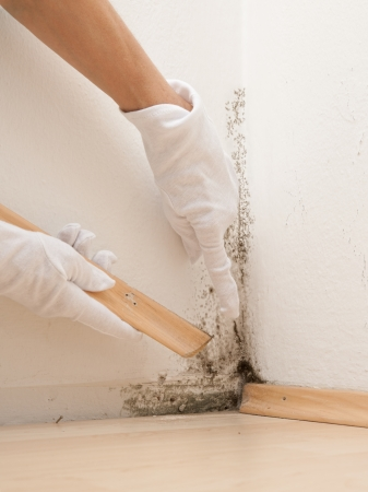 skirting: Mold in flat