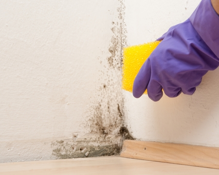 mold: fight against mould