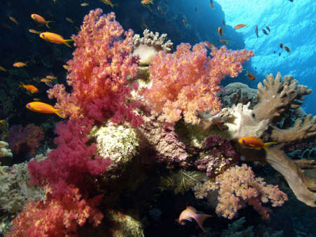 dropoff: CORAL REEF Stock Photo