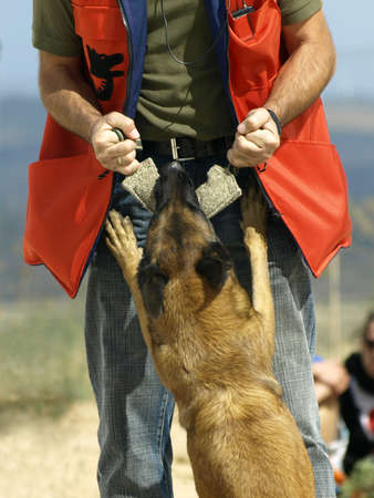 shepperd: dog training Stock Photo