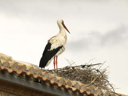 storks in the church of San Miguel in Alfaro  La Rioja