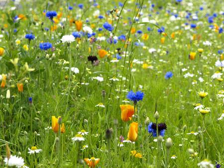 wild flower in a garden Stock Photo - 14971881