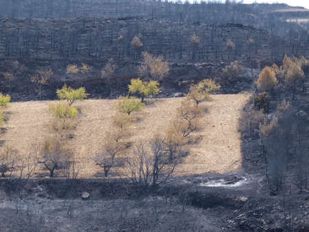 desolation: forest fire landscapes in Aras  Navarre  Stock Photo
