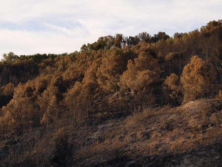 aras: forest fire landscapes in Aras  Navarre  Stock Photo